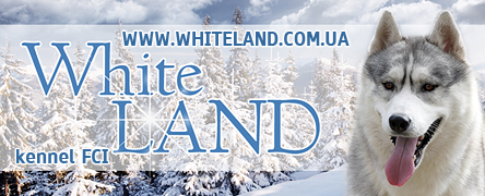 Питомник Сибирских Хаски - White Land